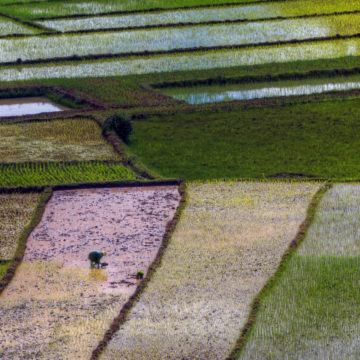 colorful fields with worker in foreground
