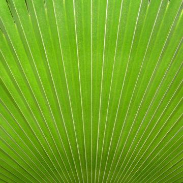 Ryan fan leaf flickr creative commons